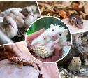 Беби-бум в Тульском экзотариуме: шиншиллы, ежи, гекконы, сахарный поссум