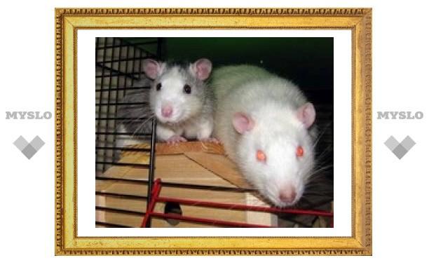 Тульских детей кусают крысы