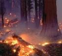 Три «Лесных патруля» помогут тушить пожары в Туле