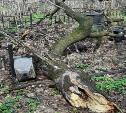 Мусор, грязь, закрытые туалеты: туляки жалуются на ужасное состояние Всехсвятского кладбища