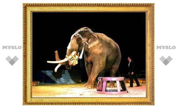 Внимание! Цирк слонов даст в Туле еще два представления!