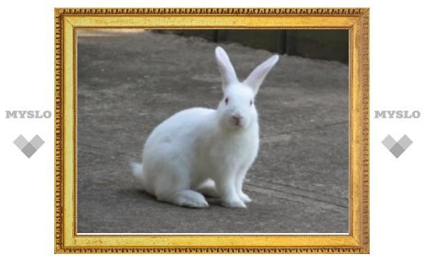Выращенные в лаборатории ткани восстановили эрекцию кроликам