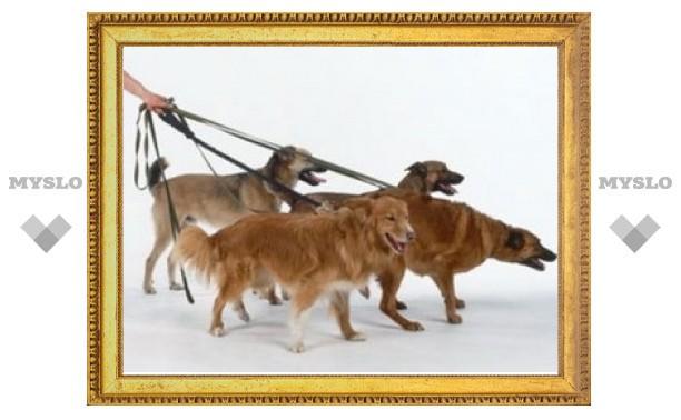 Тульским собаководам ужесточат штрафы