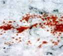 В Щекинском районе поймали браконьеров
