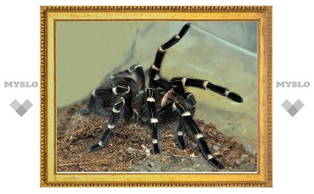 В Туле появятся пауки-гиганты