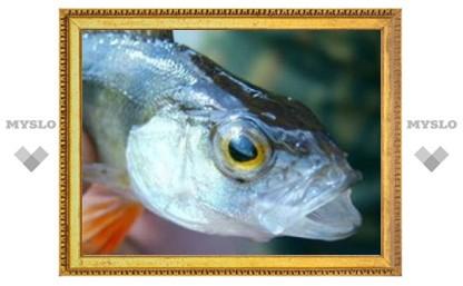 Наши предки унаследовали способность к речи у рыб