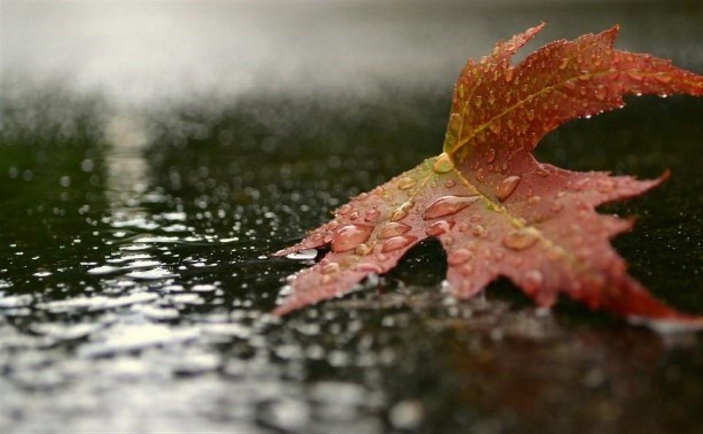 Тульскую область накроют дожди