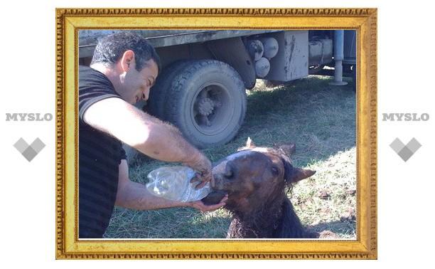 Хозяин спасенного жеребенка зарезал животное