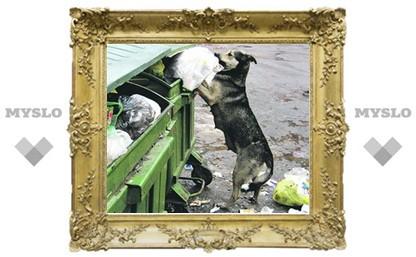 Бездомных животных в Туле будут убивать