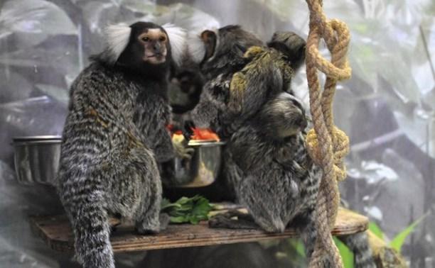 В Тульском экзотариуме родились две мармозетки