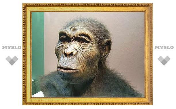 Ученые нашли потенциальное недостающее звено эволюции человека