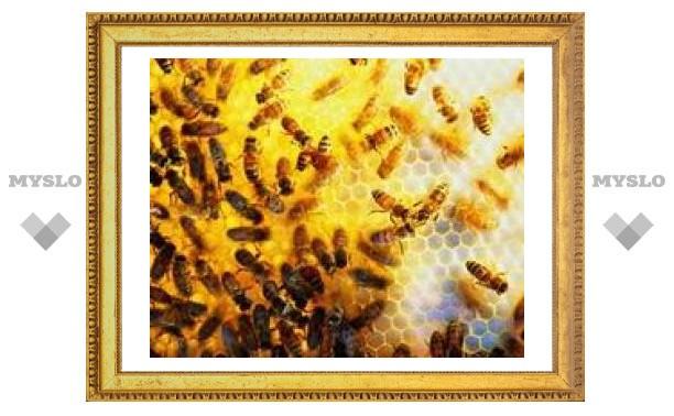 12 миллионов пчел блокировали движение автомобилей на трассе в Калифорнии
