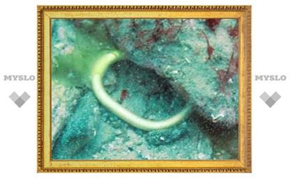 На дне Ла-Манша нашли затонувшее судно бронзового века