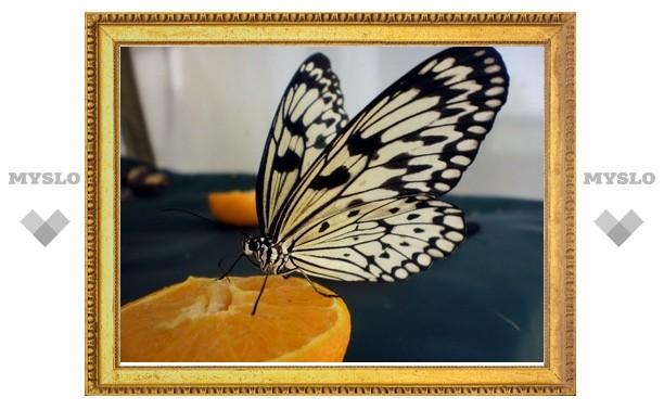 Тропические бабочки поселились в Новомосковске