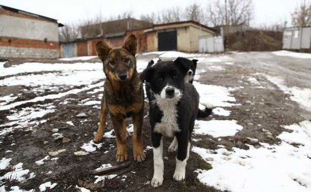 Активисты просят президента России ввести должность уполномоченного по защите животных