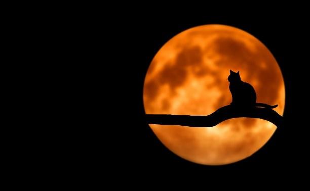 В ночь на 17 июля туляки смогут увидеть лунное затмение