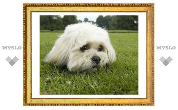 В Туле найден потерявшийся пес
