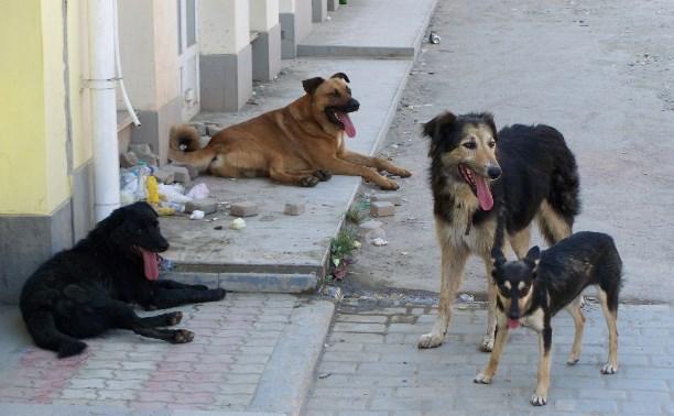 Прокуратура обязала администрацию Донского отловить бродячих собак