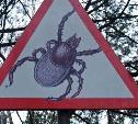 Роспотребнадзор предупреждает: в Тульской области активизируются клещи