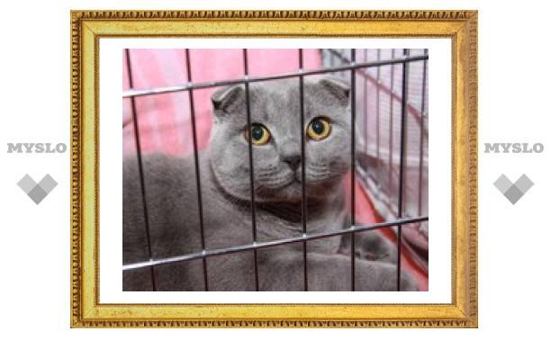 В Туле проходит выставка кошек