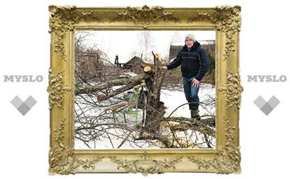 У тульских дачников украли яблоневый сад