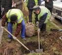 В Советском округе Тулы высадили краснолистные клены