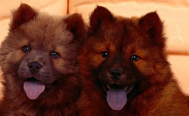В ходе разбойного нападения в Туле похищены две собаки
