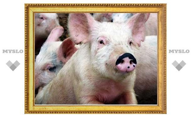 Свинья и баран станут призами на День города