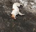 В Туле продолжается травля бездомных собак