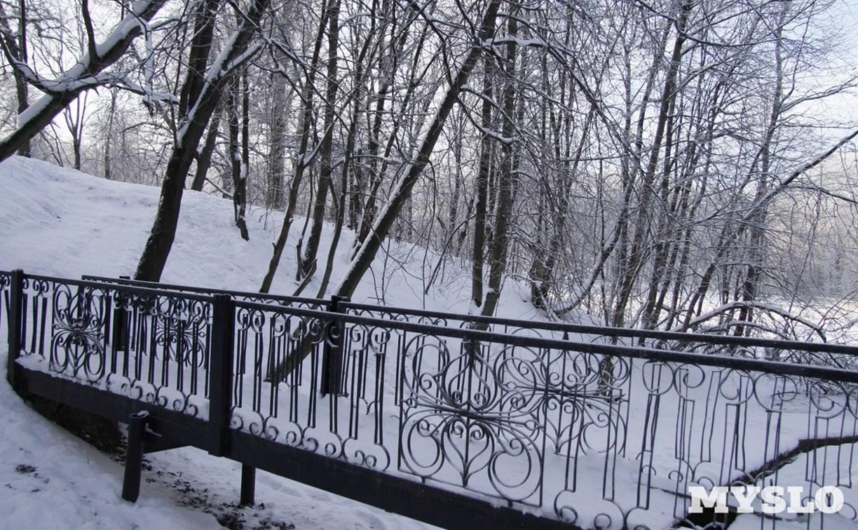 Платоновский лес получит статус особо охраняемой территории