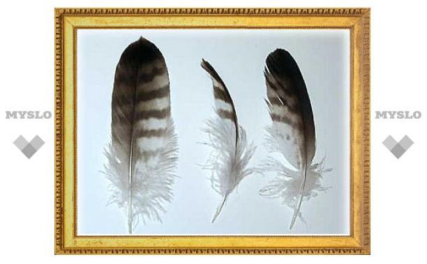 Птичьи перья помогут в хранении водорода