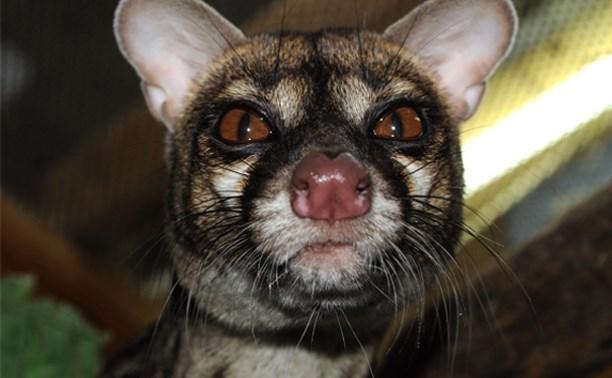 Тульский экзотариум приглашает на Всемирный день животных