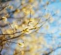 В Тульской области 25 марта солнечно, тепло и без осадков