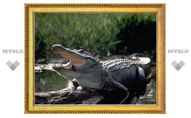 Ученые отменили отличия между крокодилами и птицами
