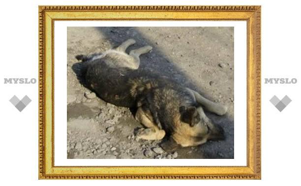 В Туле жестоко убили собаку