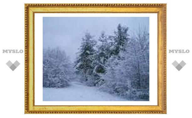 2 января: деревья в инее - небо будет синее