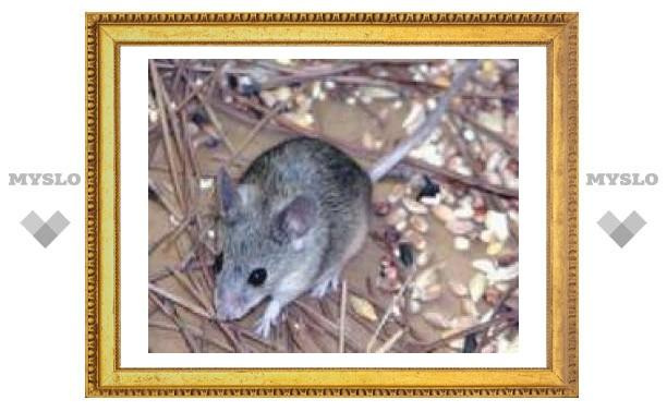 8 февраля: Из-под снега мыши лезут