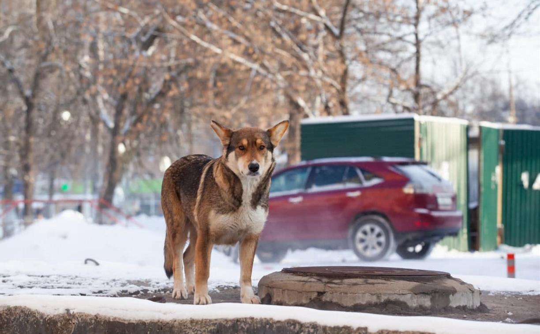 Погода в Туле 30 января: облачно, морозно, небольшой снег