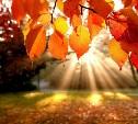 Первые дни осени в Тульской области будут сухими и тёплыми