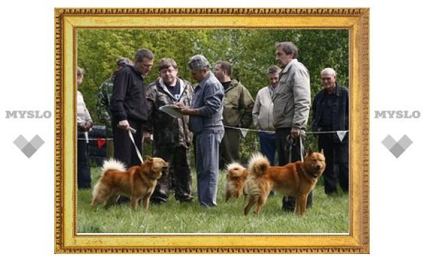 В Туле пройдет выставка охотничьих собак