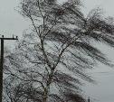 Тульский гидрометцентр: В регионе ожидается усиление ветра