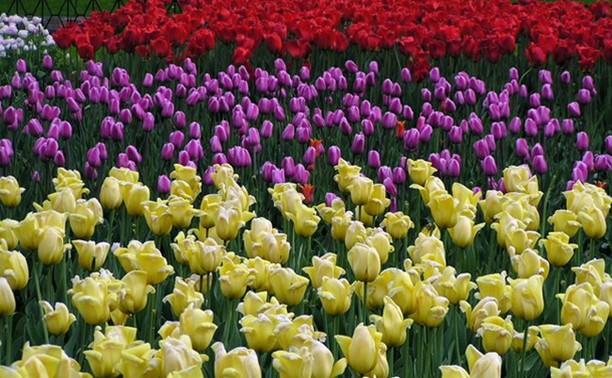 Туляков зовут посадить цветы в усадьбе Смидовичей