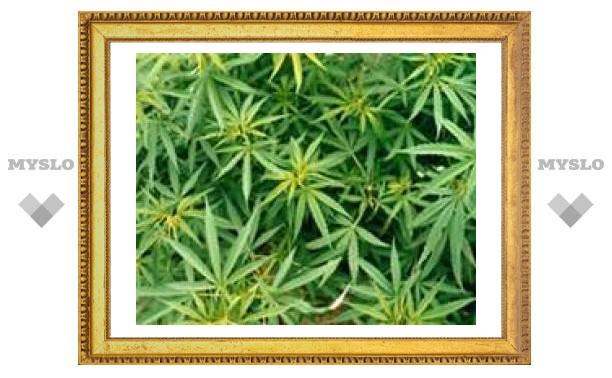 Лекарство от рака легких нашли в марихуане