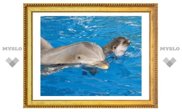 Самки дельфинов умеют готовить