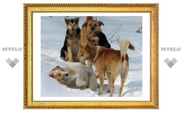 В Липках бродячие собаки нападают на людей
