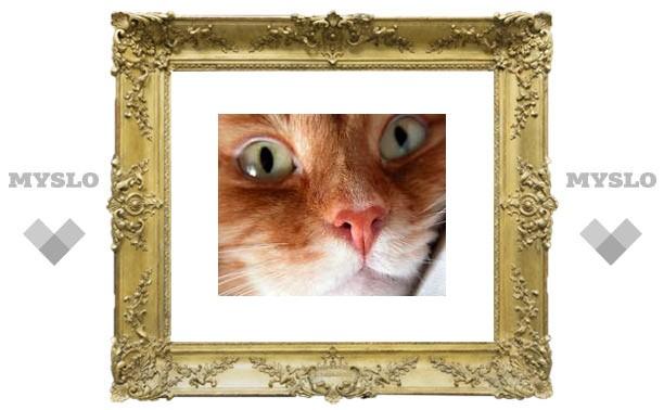 "Розетка отучила кота ""стрелять"" по стенам"