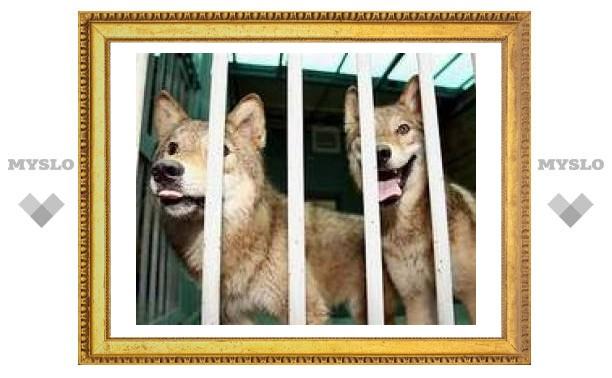 Южнокорейские ученые клонировали волков