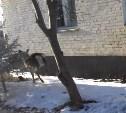 Пойманного в центре Тулы оленя приютил зооуголок ЦПКиО