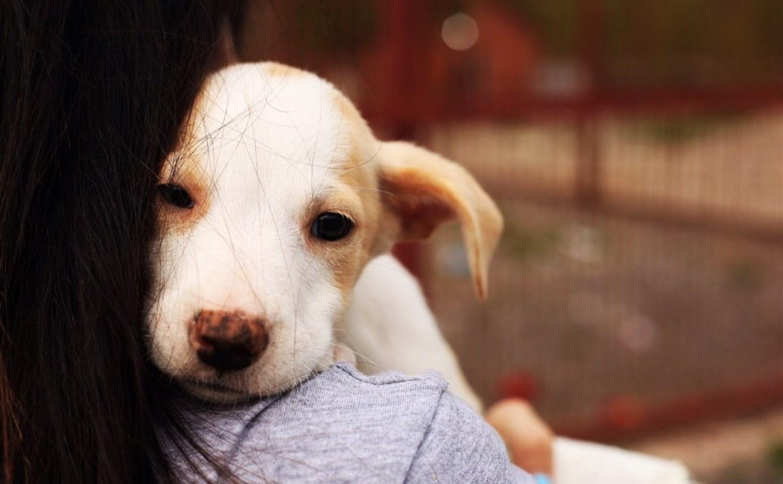 Собакам из тульского приюта нужны лекарства