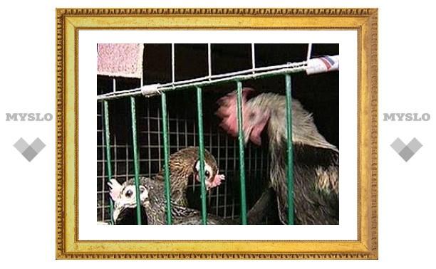 """В Подмосковье начинают прививать от опасного для людей """"птичьего гриппа"""""""